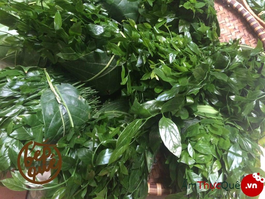 tác dụng của rau ngót rừng